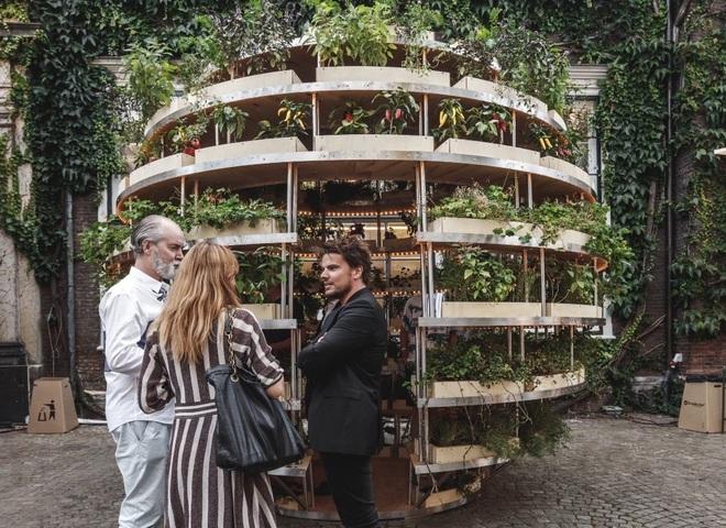 Khu vườn mini bằng gỗ giúp công cuộc trồng rau sạch trong nhà của nông dân phố dễ dàng hơn - Ảnh 6.
