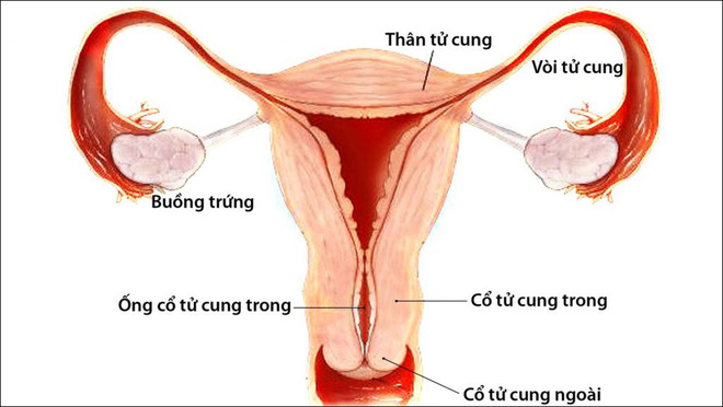 Có những điều bí ẩn trong quá trình mang thai chưa chắc mẹ bầu đã biết - Ảnh 1.