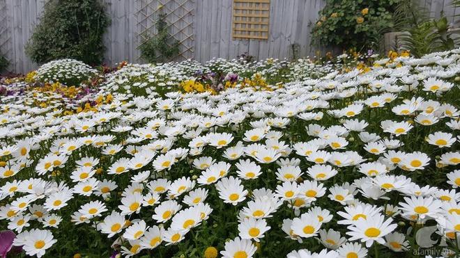 Người phụ nữ Việt tự tay biến khu vườn 700m² đầy cỏ dại thành một thảm hoa cúc dịu dàng - Ảnh 13.