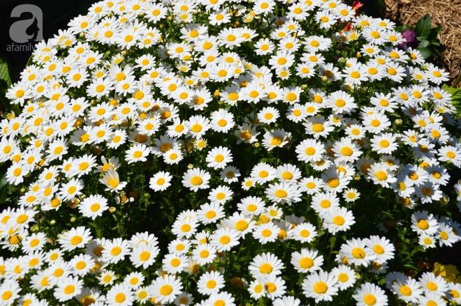 Người phụ nữ Việt tự tay biến khu vườn 700m² đầy cỏ dại thành một thảm hoa cúc dịu dàng - Ảnh 22.