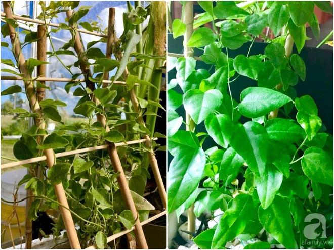 Khu vườn rộng gần 40 nghìn m² xanh tươi rau quả Việt của mẹ 3 con ở Canada - Ảnh 8.