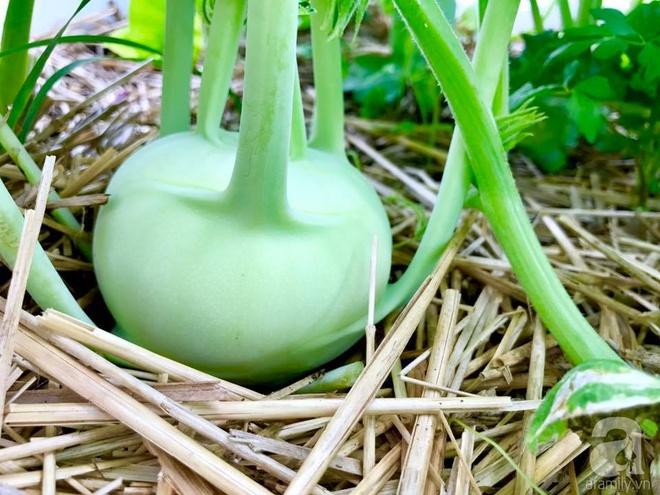 Khu vườn rộng gần 40 nghìn m² xanh tươi rau quả Việt của mẹ 3 con ở Canada - Ảnh 15.