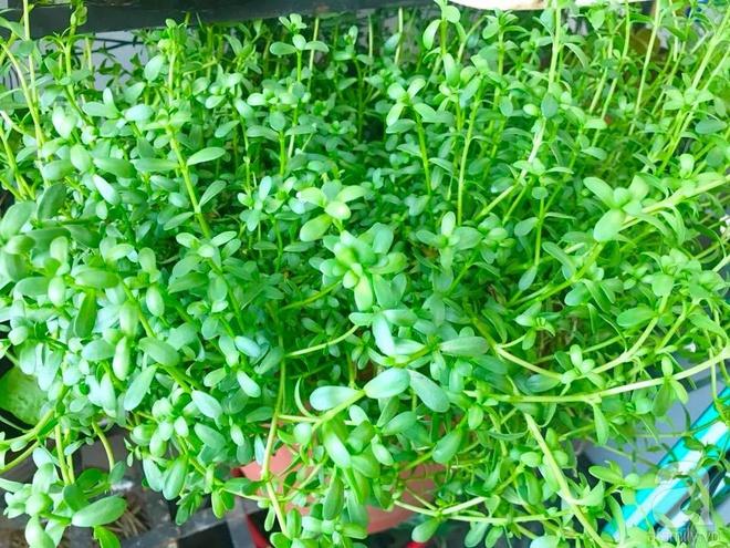 Khu vườn rộng gần 40 nghìn m² xanh tươi rau quả Việt của mẹ 3 con ở Canada - Ảnh 18.