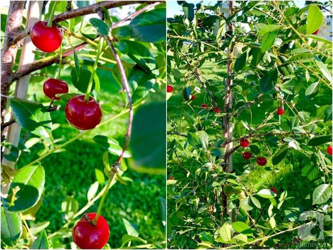 Khu vườn rộng gần 40 nghìn m² xanh tươi rau quả Việt của mẹ 3 con ở Canada - Ảnh 23.