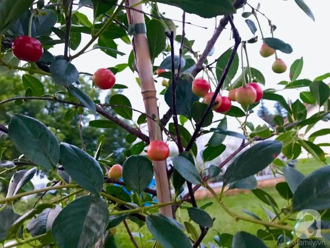Khu vườn rộng gần 40 nghìn m² xanh tươi rau quả Việt của mẹ 3 con ở Canada - Ảnh 24.