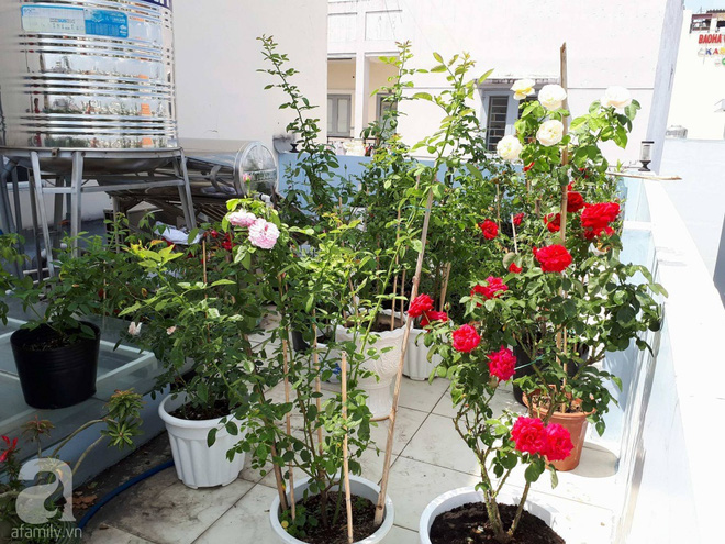Khu vườn hoa hồng trên mây dịu dàng như một bài thơ của chàng họa sĩ trẻ ở TP. HCM - Ảnh 4.