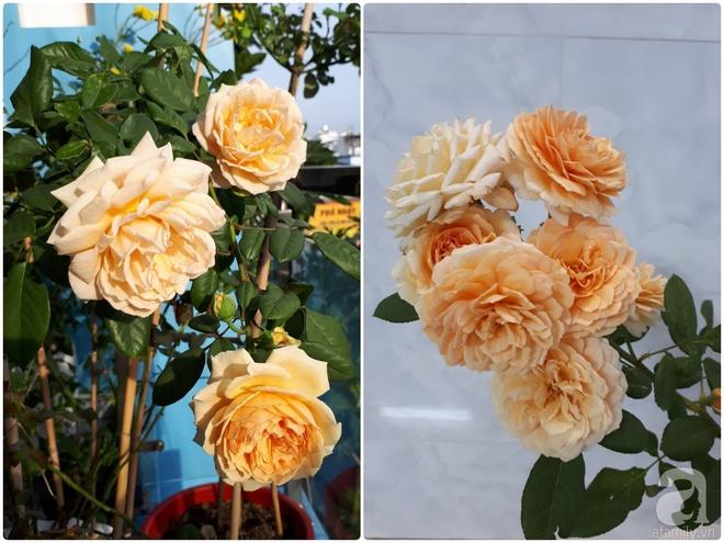 Khu vườn hoa hồng trên mây dịu dàng như một bài thơ của chàng họa sĩ trẻ ở TP. HCM - Ảnh 12.