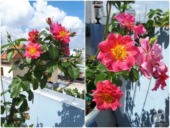 Khu vườn hoa hồng trên mây dịu dàng như một bài thơ của chàng họa sĩ trẻ ở TP. HCM - Ảnh 14.