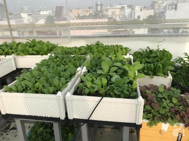 Bà mẹ trẻ ở Sài Gòn dựng hẳn khung thép trên sân thượng để trồng vườn rau quanh năm xanh tốt - Ảnh 2.