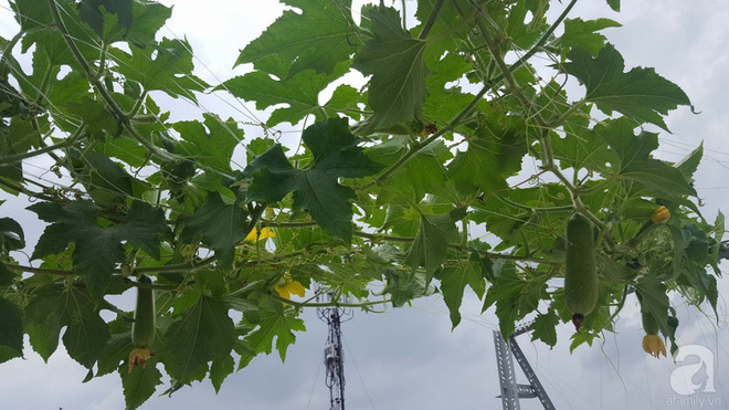 Bà mẹ trẻ ở Sài Gòn dựng hẳn khung thép trên sân thượng để trồng vườn rau quanh năm xanh tốt - Ảnh 4.