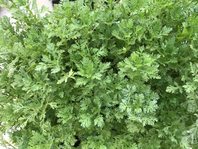 Bà mẹ trẻ ở Sài Gòn dựng hẳn khung thép trên sân thượng để trồng vườn rau quanh năm xanh tốt - Ảnh 10.