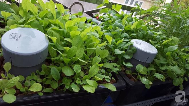 Bà mẹ trẻ ở Sài Gòn dựng hẳn khung thép trên sân thượng để trồng vườn rau quanh năm xanh tốt - Ảnh 21.