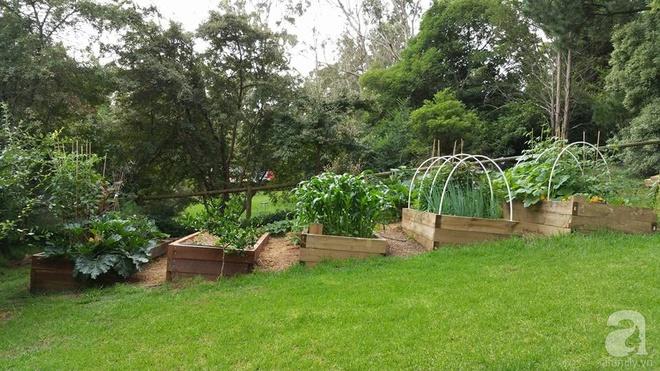 Nàng dâu Việt ở Úc tự tay cải tạo mảnh đất gần 2000m² thành khu vườn rực rỡ sắc hoa và rau quả - Ảnh 3.