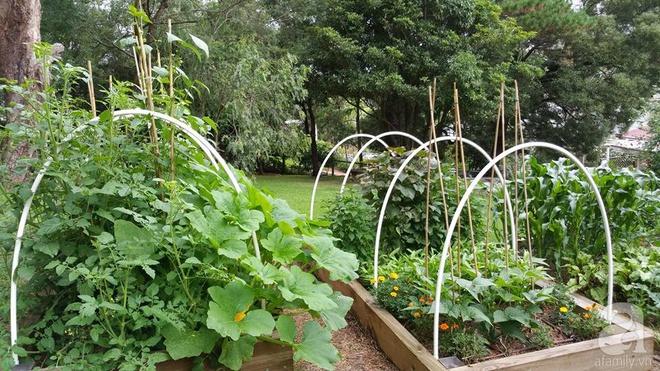 Nàng dâu Việt ở Úc tự tay cải tạo mảnh đất gần 2000m² thành khu vườn rực rỡ sắc hoa và rau quả - Ảnh 4.