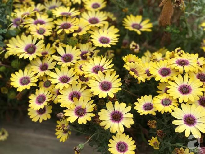 Nàng dâu Việt ở Úc tự tay cải tạo mảnh đất gần 2000m² thành khu vườn rực rỡ sắc hoa và rau quả - Ảnh 27.