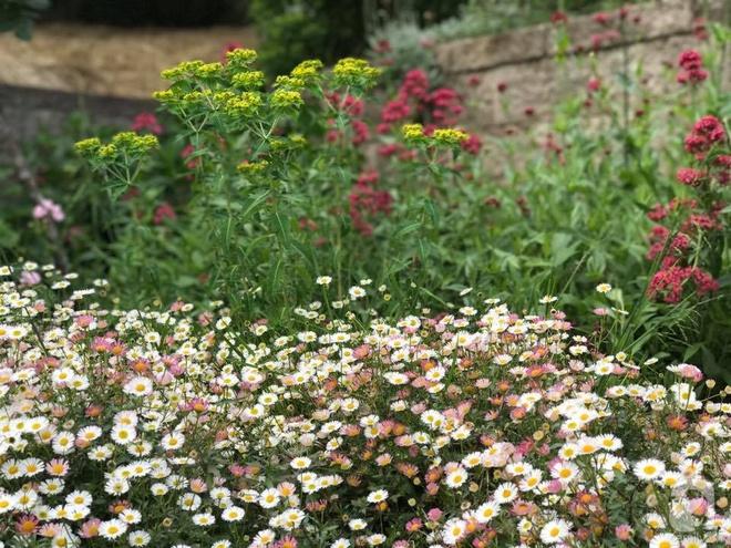 Nàng dâu Việt ở Úc tự tay cải tạo mảnh đất gần 2000m² thành khu vườn rực rỡ sắc hoa và rau quả - Ảnh 29.