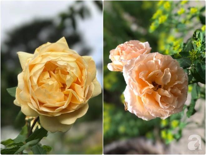 Nàng dâu Việt ở Úc tự tay cải tạo mảnh đất gần 2000m² thành khu vườn rực rỡ sắc hoa và rau quả - Ảnh 30.