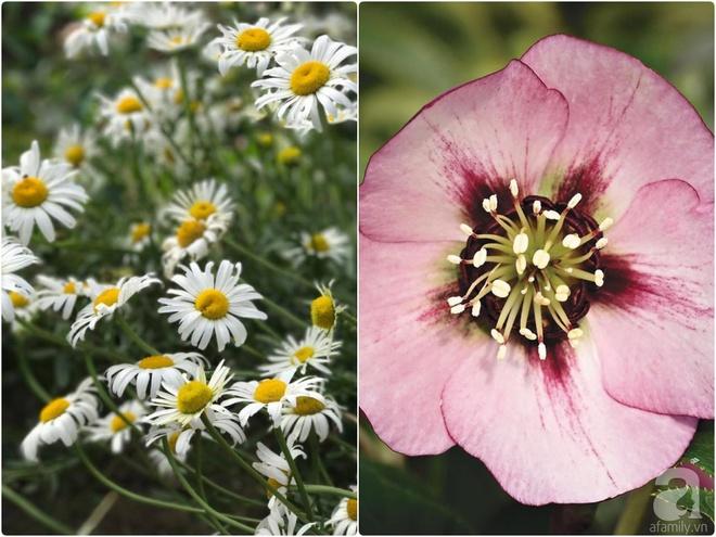 Nàng dâu Việt ở Úc tự tay cải tạo mảnh đất gần 2000m² thành khu vườn rực rỡ sắc hoa và rau quả - Ảnh 31.