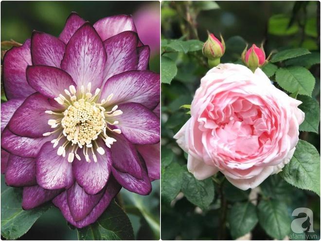 Nàng dâu Việt ở Úc tự tay cải tạo mảnh đất gần 2000m² thành khu vườn rực rỡ sắc hoa và rau quả - Ảnh 32.