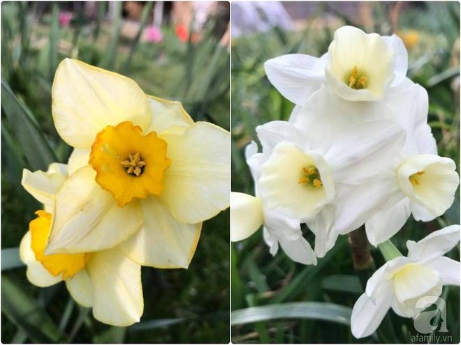 Nàng dâu Việt ở Úc tự tay cải tạo mảnh đất gần 2000m² thành khu vườn rực rỡ sắc hoa và rau quả - Ảnh 33.