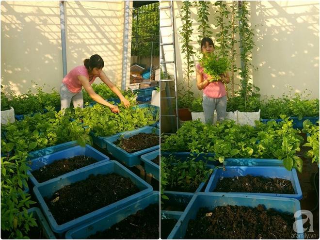 Mẹ đảm ở Hưng Yên biến sân thượng 40m² thành khu vườn xanh ngát, thu hoạch đến hàng chục cân rau củ sạch - Ảnh 1.