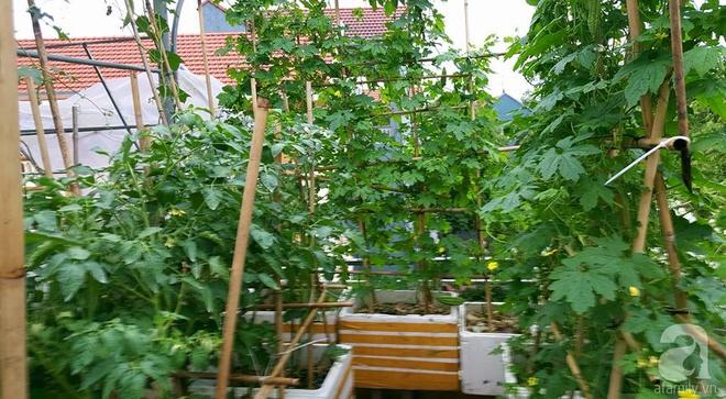 Mẹ đảm ở Hưng Yên biến sân thượng 40m² thành khu vườn xanh ngát, thu hoạch đến hàng chục cân rau củ sạch - Ảnh 3.