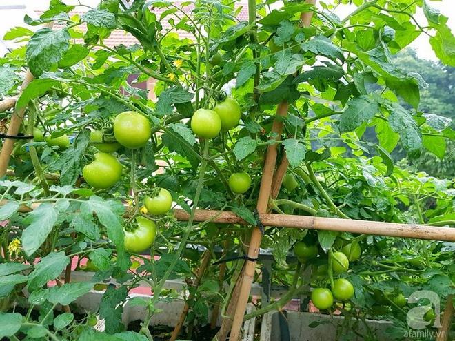 Mẹ đảm ở Hưng Yên biến sân thượng 40m² thành khu vườn xanh ngát, thu hoạch đến hàng chục cân rau củ sạch - Ảnh 5.