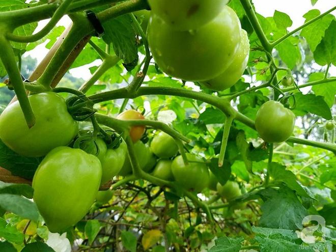 Mẹ đảm ở Hưng Yên biến sân thượng 40m² thành khu vườn xanh ngát, thu hoạch đến hàng chục cân rau củ sạch - Ảnh 6.