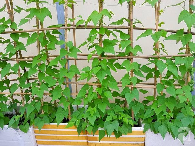 Mẹ đảm ở Hưng Yên biến sân thượng 40m² thành khu vườn xanh ngát, thu hoạch đến hàng chục cân rau củ sạch - Ảnh 13.