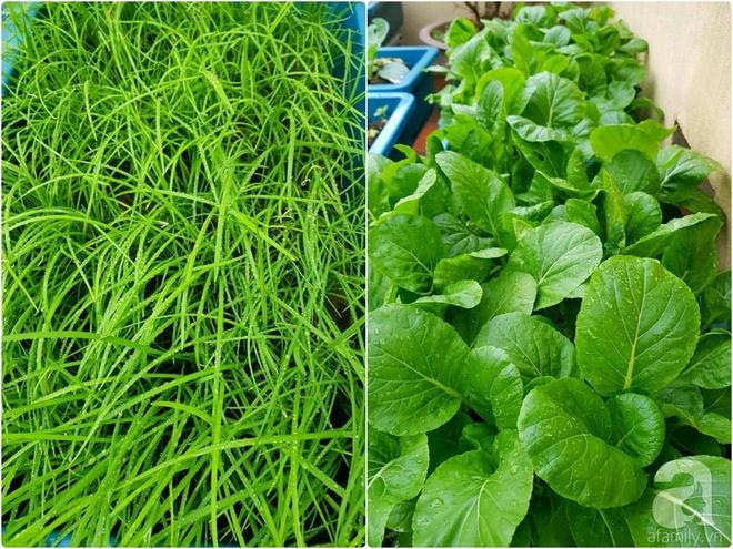 Mẹ đảm ở Hưng Yên biến sân thượng 40m² thành khu vườn xanh ngát, thu hoạch đến hàng chục cân rau củ sạch - Ảnh 17.