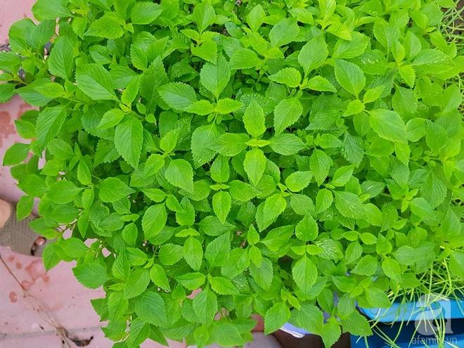 Mẹ đảm ở Hưng Yên biến sân thượng 40m² thành khu vườn xanh ngát, thu hoạch đến hàng chục cân rau củ sạch - Ảnh 19.