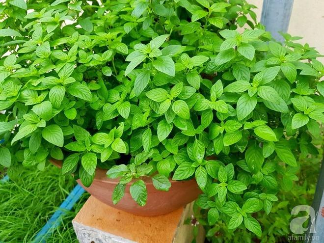 Mẹ đảm ở Hưng Yên biến sân thượng 40m² thành khu vườn xanh ngát, thu hoạch đến hàng chục cân rau củ sạch - Ảnh 23.
