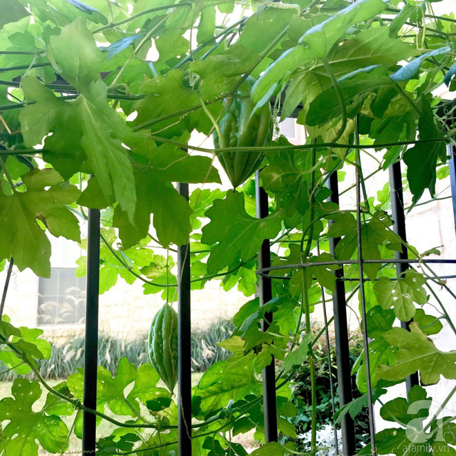 Nữ du học sinh Việt tại Mỹ tiết lộ bí quyết tạo khu vườn mini 6m² nhưng đủ rau và hoa đẹp hút hồn - Ảnh 6.