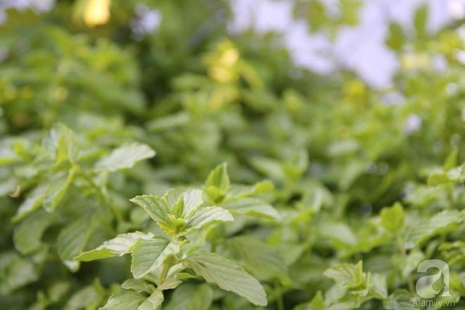 Nữ du học sinh Việt tại Mỹ tiết lộ bí quyết tạo khu vườn mini 6m² nhưng đủ rau và hoa đẹp hút hồn - Ảnh 8.