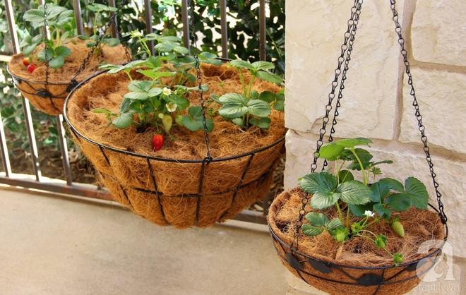 Nữ du học sinh Việt tại Mỹ tiết lộ bí quyết tạo khu vườn mini 6m² nhưng đủ rau và hoa đẹp hút hồn - Ảnh 18.