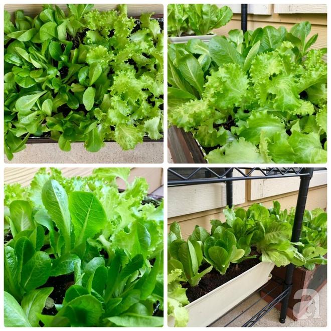 Nữ du học sinh Việt tại Mỹ tiết lộ bí quyết tạo khu vườn mini 6m² nhưng đủ rau và hoa đẹp hút hồn - Ảnh 27.