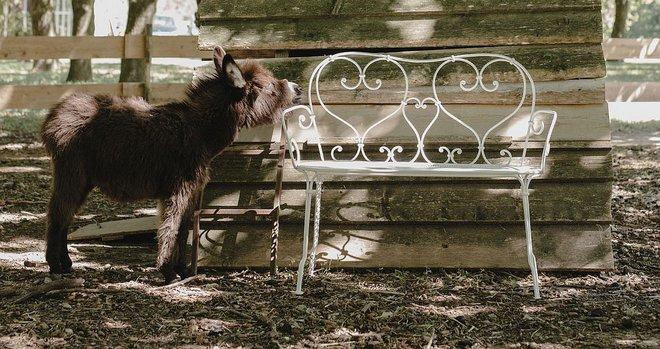 Học cách sử dụng những bộ bàn ghế cổ điển của người Pháp để ngôi nhà thật lãng mạn và quyến rũ - Ảnh 8.