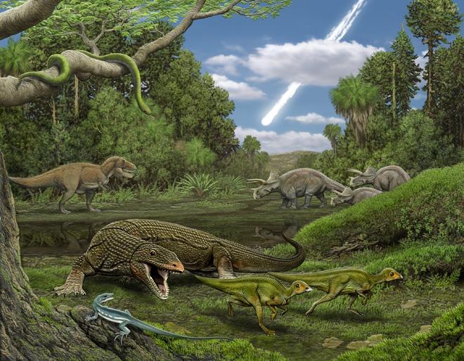 Phát hiện gây sốc: Có một loài cây từ thời khủng long vẫn sống tốt trên Trái đất - Ảnh 2.