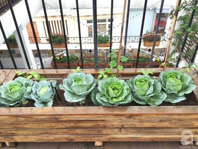 Trồng rau trong khung gỗ - giải pháp vừa có rau sạch để ăn lại vừa có khu vườn đẹp - Ảnh 2.