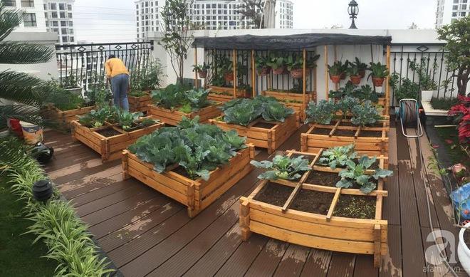 Trồng rau trong khung gỗ - giải pháp vừa có rau sạch để ăn lại vừa có khu vườn đẹp - Ảnh 11.
