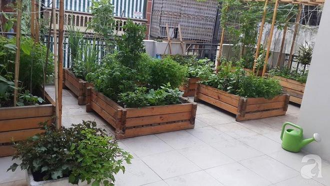 Trồng rau trong khung gỗ - giải pháp vừa có rau sạch để ăn lại vừa có khu vườn đẹp - Ảnh 13.