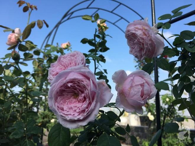 3 vườn hồng đẹp như mơ khiến độc giả tâm đắc tặng ngàn like trong năm 2017 - Ảnh 30.