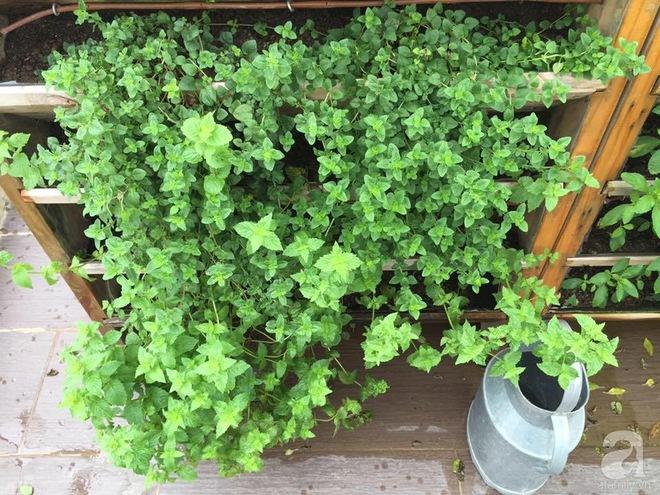 Trồng rau trong khung gỗ - giải pháp vừa có rau sạch để ăn lại vừa có khu vườn đẹp - Ảnh 14.