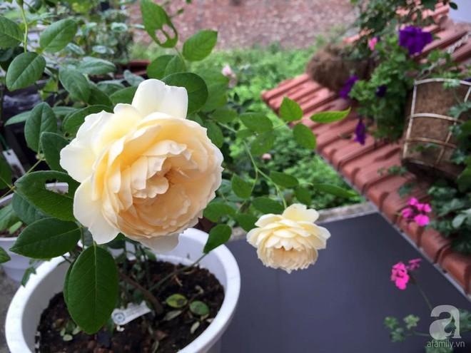 3 vườn hồng đẹp như mơ khiến độc giả tâm đắc tặng ngàn like trong năm 2017 - Ảnh 32.