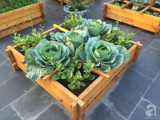 Trồng rau trong khung gỗ - giải pháp vừa có rau sạch để ăn lại vừa có khu vườn đẹp - Ảnh 18.