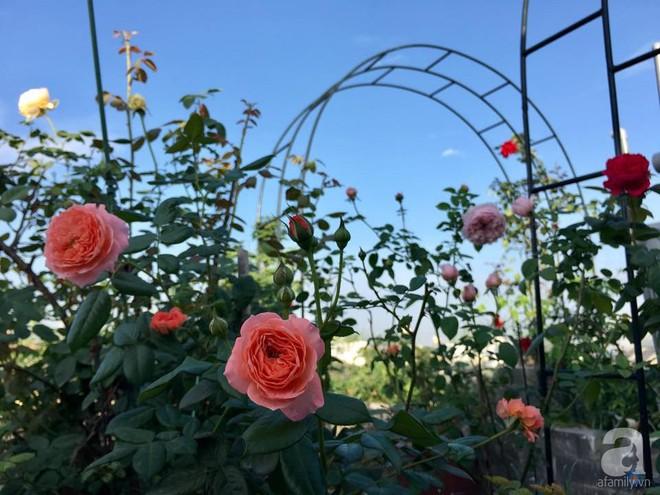 3 vườn hồng đẹp như mơ khiến độc giả tâm đắc tặng ngàn like trong năm 2017 - Ảnh 27.