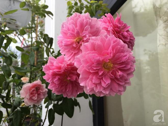 3 vườn hồng đẹp như mơ khiến độc giả tâm đắc tặng ngàn like trong năm 2017 - Ảnh 34.