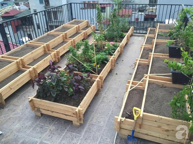 Trồng rau trong khung gỗ - giải pháp vừa có rau sạch để ăn lại vừa có khu vườn đẹp - Ảnh 4.