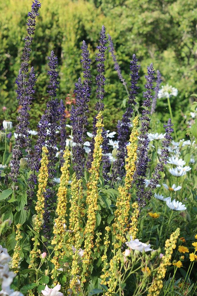 Khu vườn địa đàng của cụ bà 83 tuổi đã dành 33 năm để thỏa mãn tình yêu với cây và hoa - Ảnh 4.