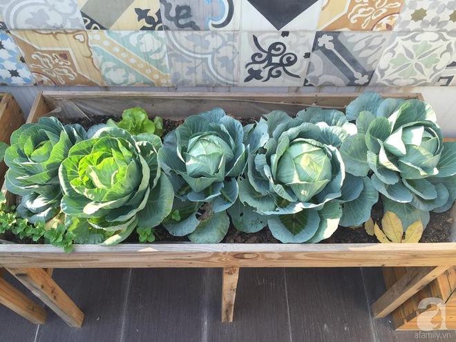 Trồng rau trong khung gỗ - giải pháp vừa có rau sạch để ăn lại vừa có khu vườn đẹp - Ảnh 8.